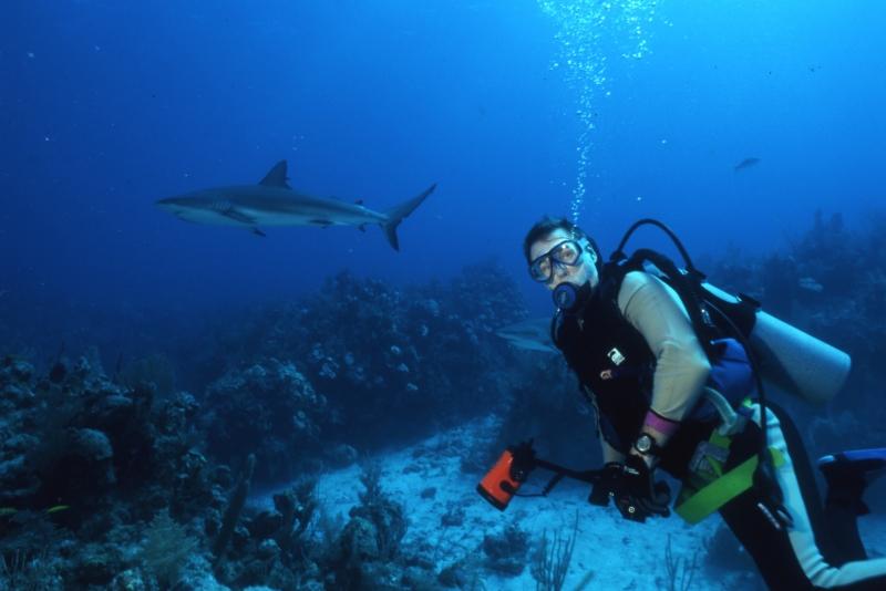 Blacktip reef sharks & Brad-Exumas