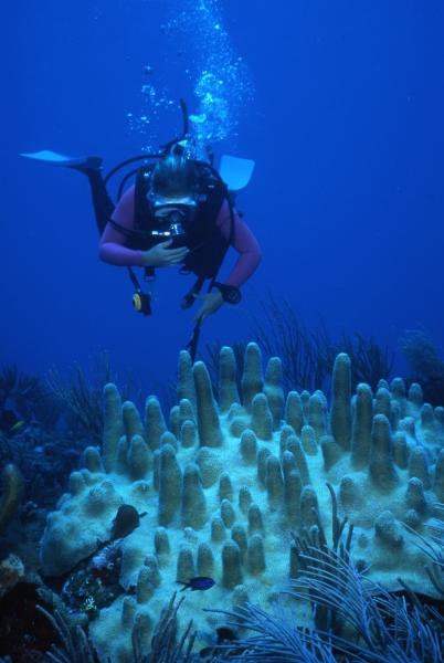 Pillar coral & diver-Statia
