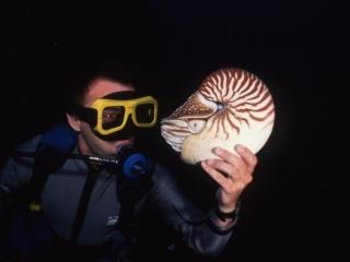 Chambered nautilus & Brad-Palau
