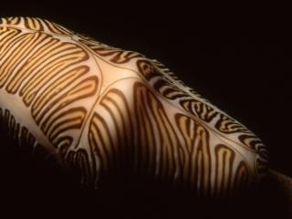 Fingerprint Cyphoma-Saba