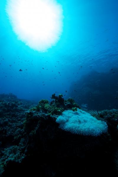 Acropora coral & sun (dig)-Fiji