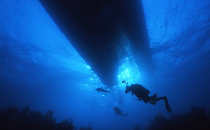 Blacktip reef shark & divers under boat-Exumas
