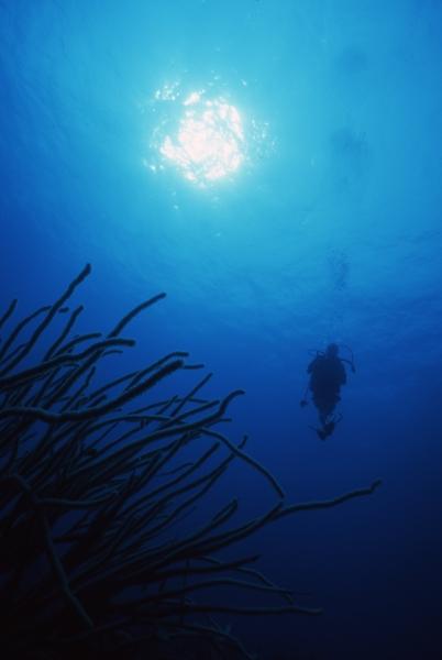 Diver & Bushy soft coral-San Andreas Island