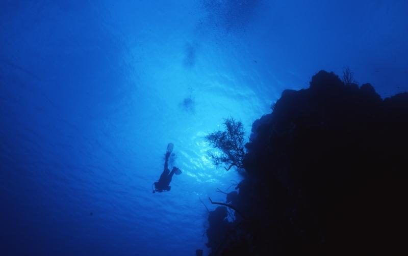 Diver over reef-Belize