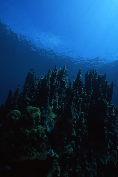 Pillar coral & Snell's window-San Andreas Island