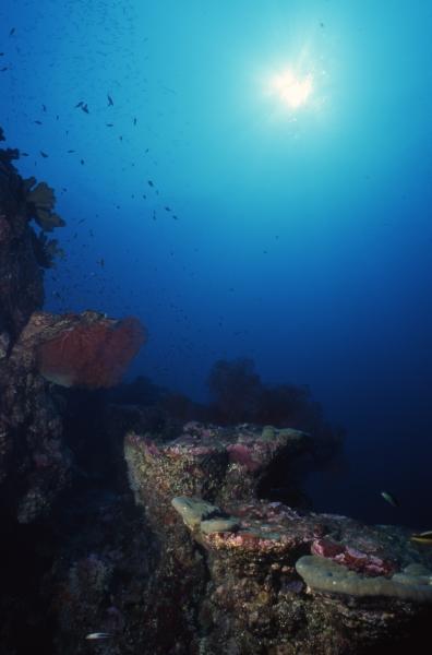 Reef & sun-Burma Banks