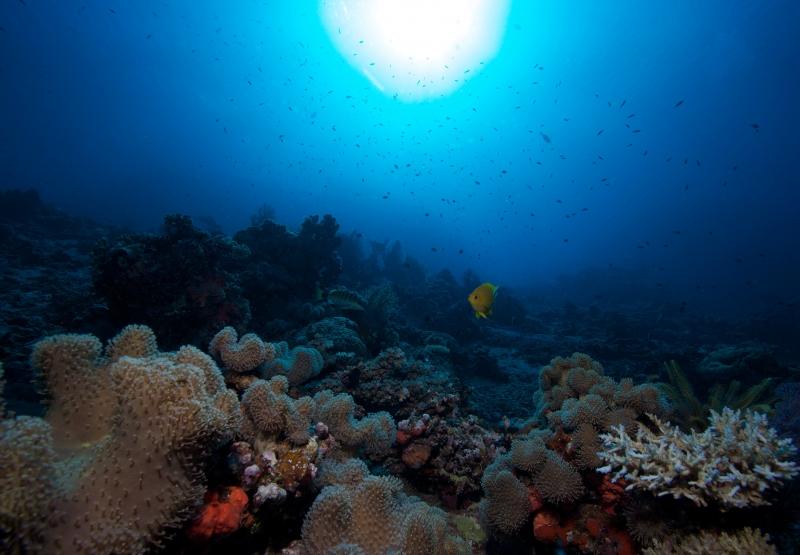 Reef & sun (dig)-Fiji