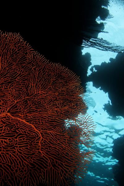 Sea fan & cut in reef (dig)-Fiji