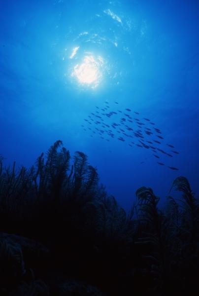 Soft coral & fish silhouette-San Andreas Island