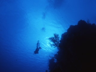Diver over reef-Belize