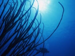 Divers & Bushy soft coral-San Andreas Island