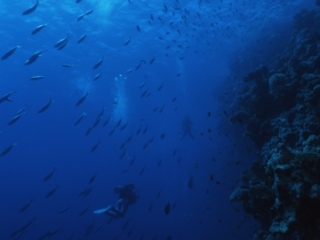 Divers along wall-Red Sea