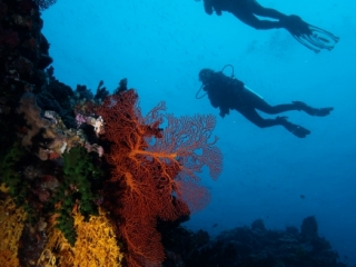 Divers over reef (dig)-Fiji