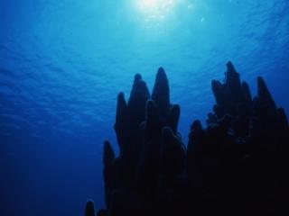 Pillar coral silhouette-San Andreas