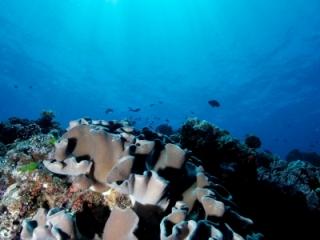 Reeftop scenic & sun (dig)-Fiji
