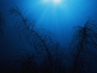 Sea plume silhouette-Bequia