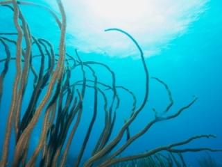 Soft corals & sun (dig)-British Virgin Islands