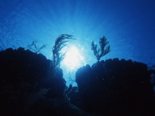 Twin Boulder corals silhouette-Little Cayman Island