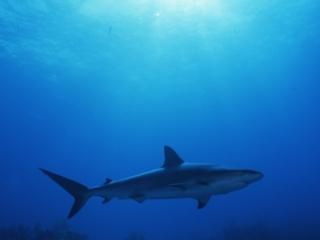 Blacktip shark & sun-Exumas, Bahamas