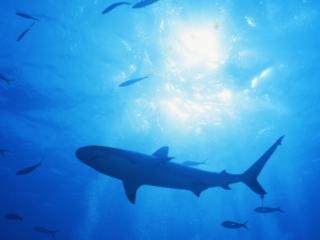 Blacktip shark with sun & bubbles-Exumas