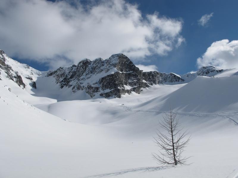 Lone tree in snow-RK Heliski