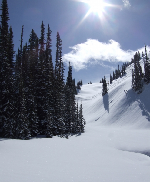 Selkirk Wilderness slope with sun (dig)