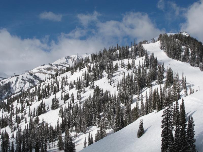 Ski slope(dig)-Jackson Hole, Wyoming