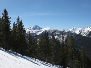 Conifers and Purcell Mountains-Panorama