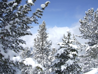 Snow covered trees (dig)-Panorama, British Columbia