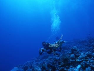Hawksbill turtle & diver-Palau