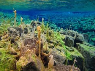 Sifra algae, Thingvellir 4 (dig)-Iceland