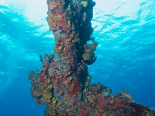 Coral encrusted structure, Wreck Alley (dig)-BVI